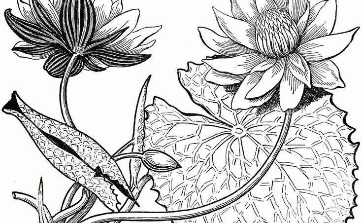 Wow 14 Gambar Dekoratif Tumbuhan Hitam Putih Buku