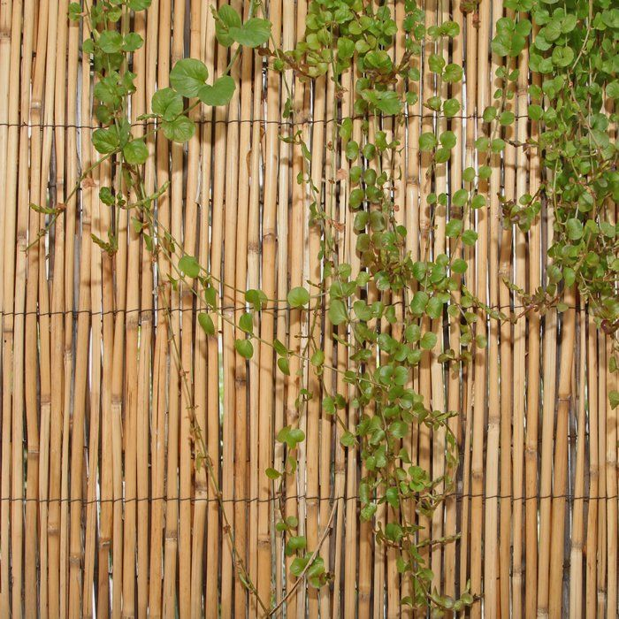 6 Ft H X 16 Ft W Peeled Reed Fencing Garden Fence Panels