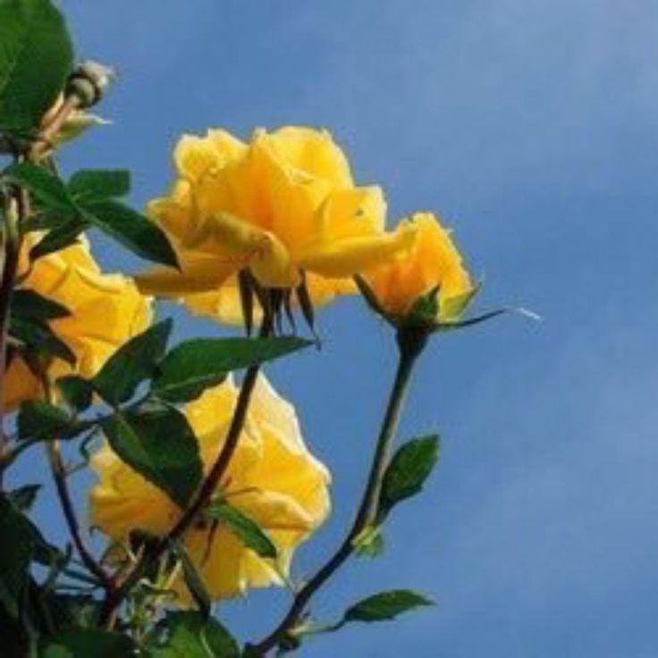 Best 25+ Aesthetic Roses Ideas On Pinterest