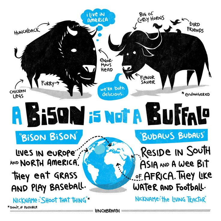 Buffalo and bison are related and both are delicious and healthy