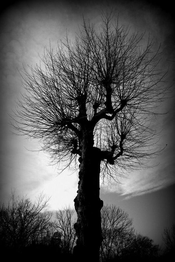 Tree in Stockholm by Oleg Anisimov on 500px
