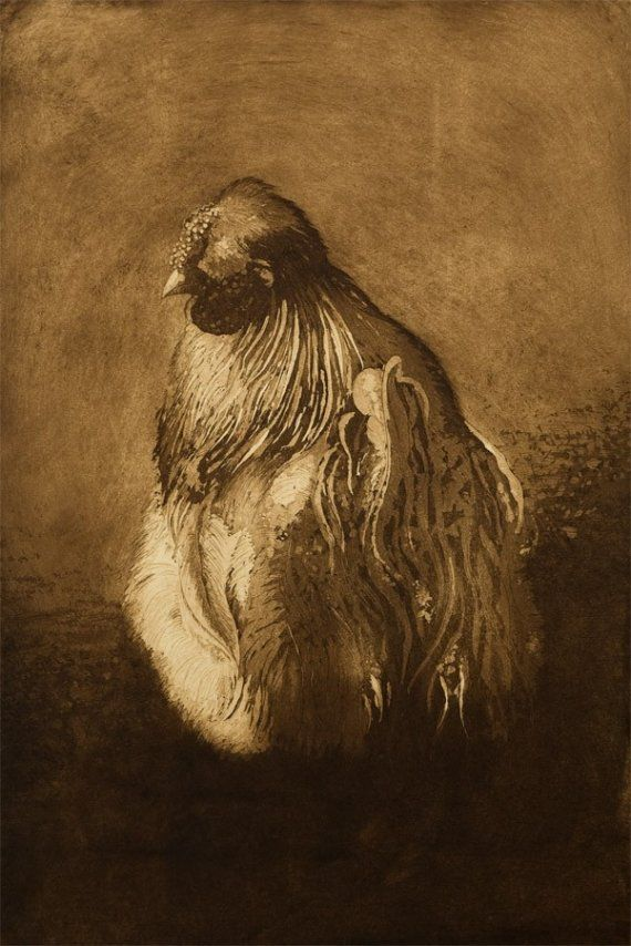 Mr Silkie  an etching of a Silkie Rooster by ElizabethMoriarty