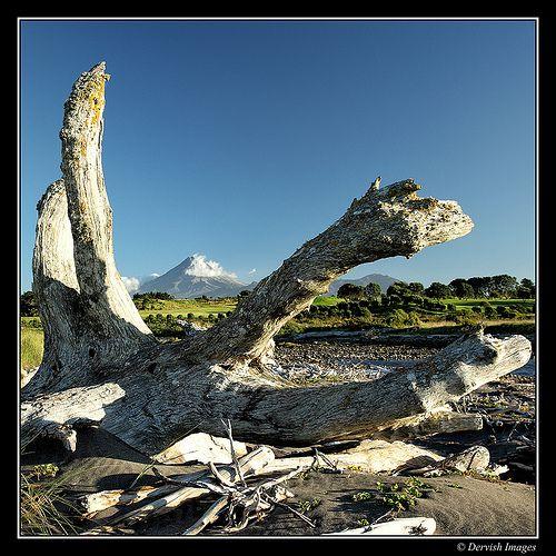 Taranaki Driftwood Series