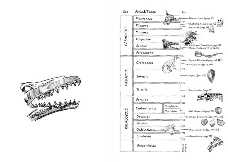 Eliza's Journal. Illustration By Kati Green. Palaeozoic, Meesozoic, Caenozoic