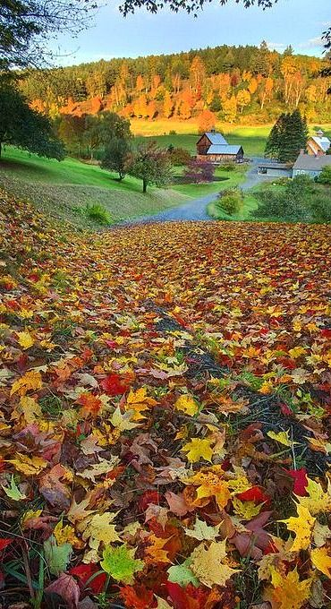 Sleepy Hollow Farm, Woodstock, Vermont                                                                                                                                                     Mais