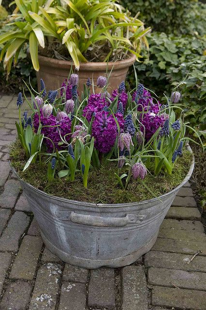 Bulbs in a bucket! Old buckets filled with bulbs are a great way to recycle unused items and add color to a porch or patio. Follow Fernwood for other ideas like this one!