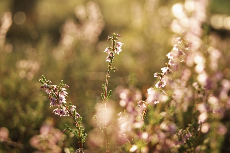 #nature #landscape #forest #trees  #summer #macro #flowers #sunset #sony #sonyalpha