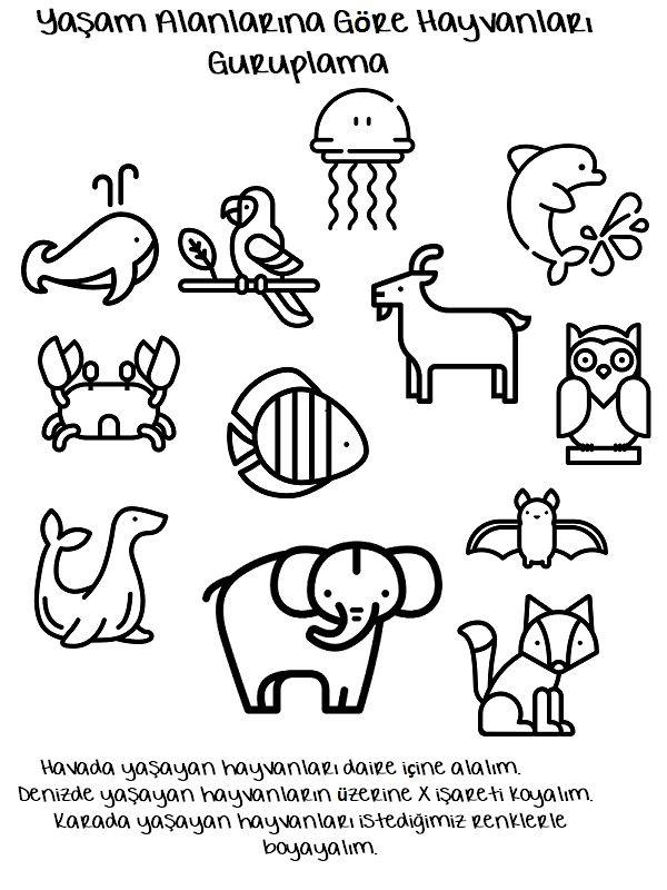 Yaşam Alanlarına Göre Hayvanlar Hakkında Hazırladığım çalışma