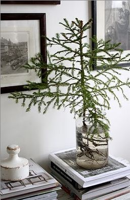 Loving this modern take on the Christmas tree! By taking a small, living tree, untangling and cleaning the roots and placing it in a large jar or vase, you get a beautiful contemporary Christmas tree that you can plant after the holidays.