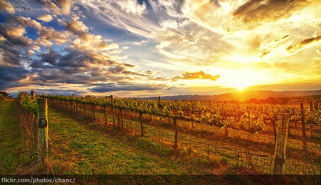 Cudgegong River Valley, NSW, Australia | Moothi's Estate, Mudgee by Christopher Chan, via Flickr