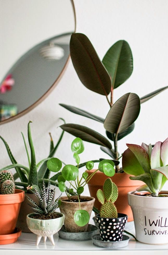 """So many plants! Love the """"I will survive"""" pot and the polka dot planter too! So…"""