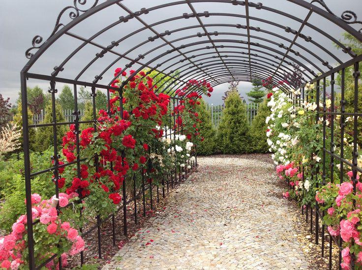 Garden-design .PROJEKTOWANIE OGRODÓW. OGRÓD RÓŻANY KIELCE