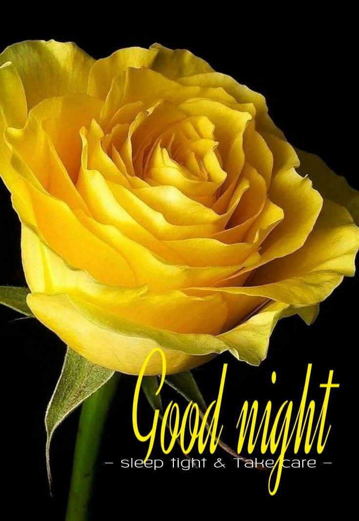 Good Night Sister With Images Rose Flower Photos