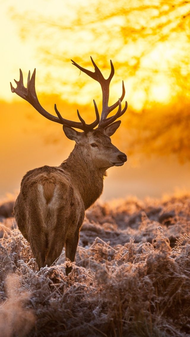 391 best mobile wallpapers images on pinterest adorable - Browning deer cell phone wallpaper ...