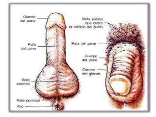 El aparato reproductor femenino es el encargado de  producir la fecundación y el desarrollo del nuevo ser.