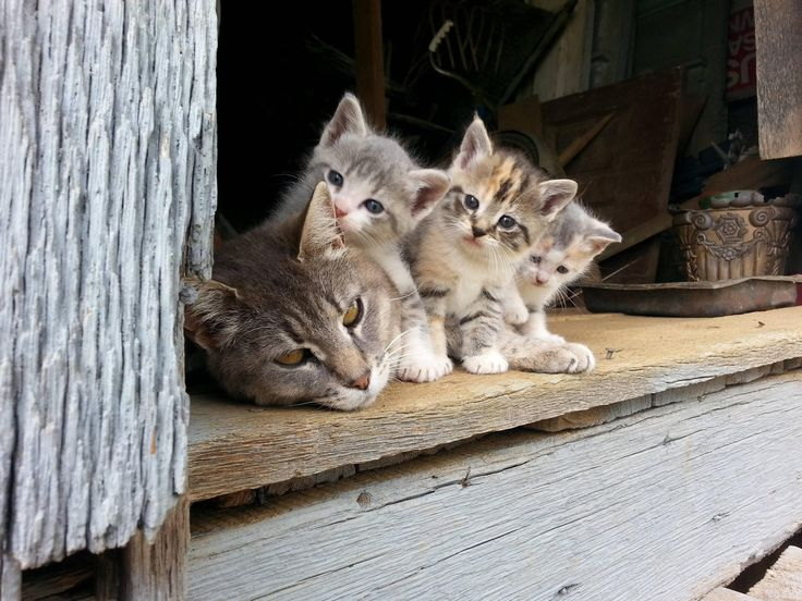 .momma kitty & kittens!.