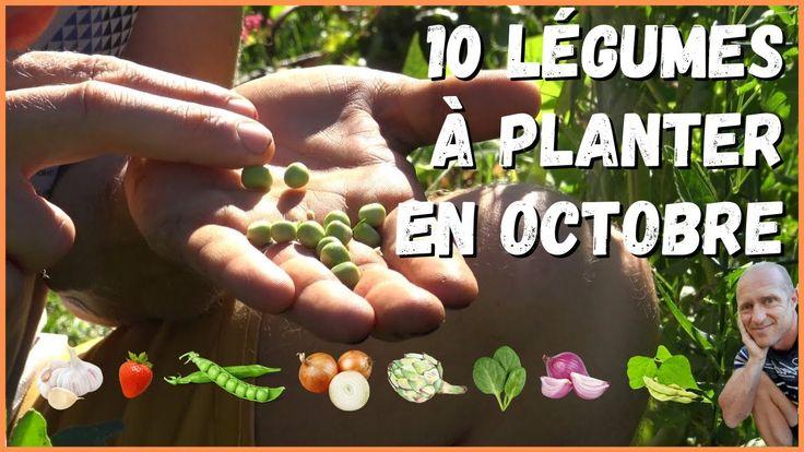 10 légumes à planter en octobre au potager ! - YouTube en 2020   Que planter en octobre, Potager ...