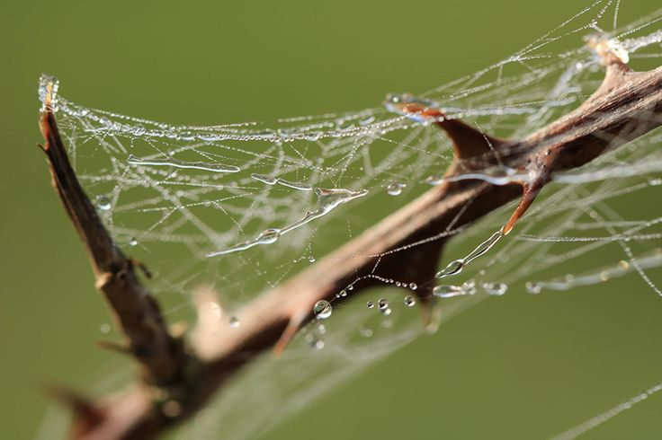 Spider web with water droplets taken with the Canon EOS 760D digital SLR camera Best price on Canon 760d body and Canon 760d lens kits https://www.camerasdirect.com.au/digital-cameras/digital-slr-cameras/canon-dslr-cameras