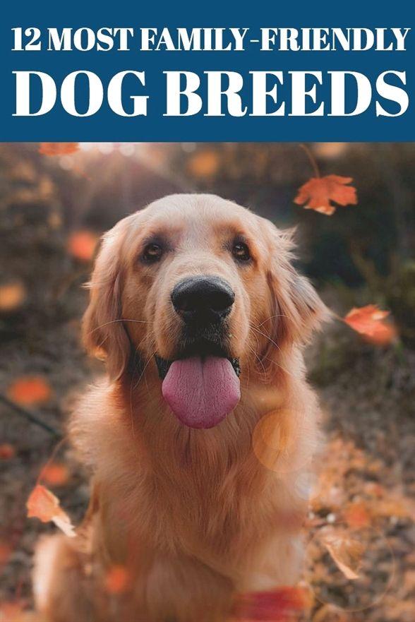 Dog Training Knoxville Tn Dog Training Yulee Fl Service Dog