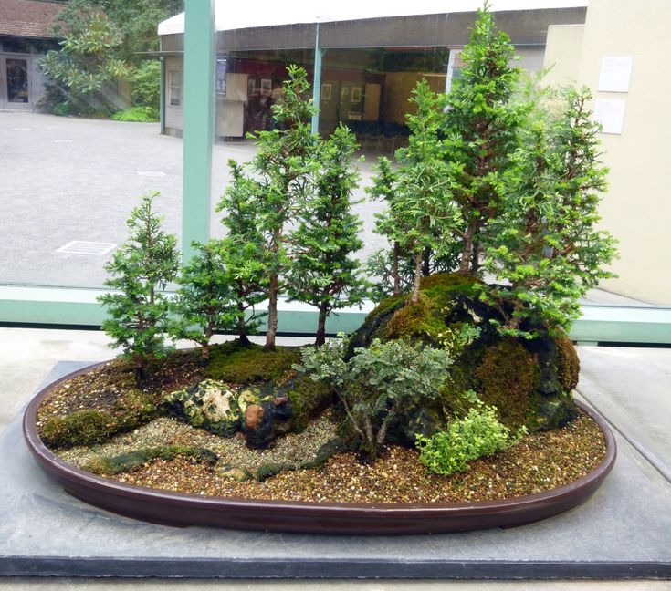 On my way to Mt. Rainier last week I happened upon a sign for a bonsai garden. The Pacific Rim Bonsai Collection is a meticulously curated compendium of bonsai trees from six Asian nations that cat…