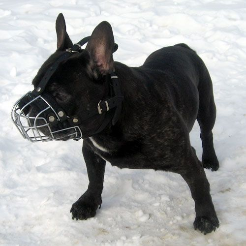 draht maulkorb französische bulldogge kaufen