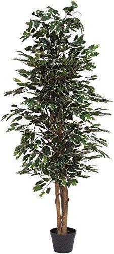 Ficus Variegato - Albero Artificiale con Tronchi Veri - A... https://www.amazon.it/dp/B00BJJ95KW/ref=cm_sw_r_pi_dp_x_erEizbS698XSZ