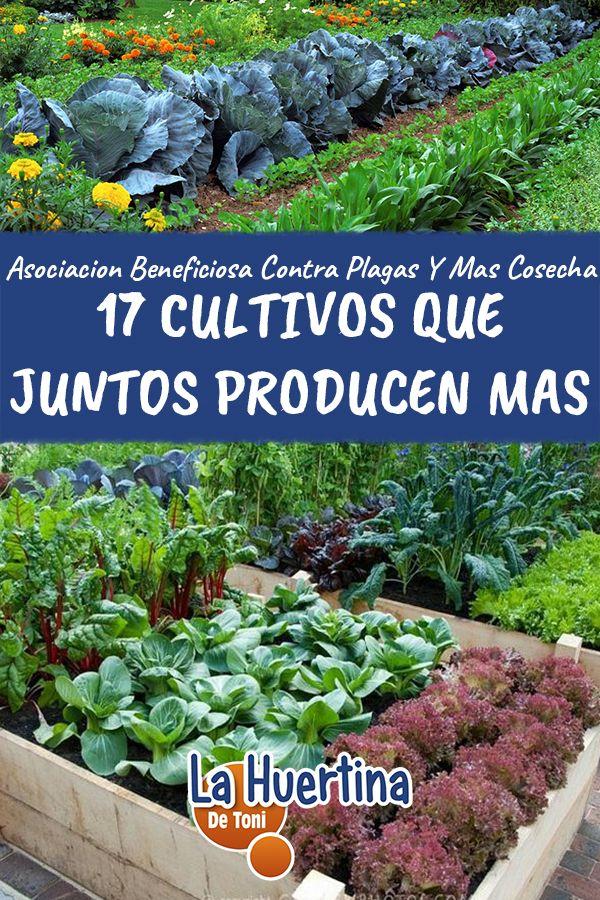 17 Cultivos Que Puedes Plantar Juntos Y Mejorara Tu Produccion En 2020 Jardin De Vegetales Jardineria Y Plantas Cultivo De Hortalizas