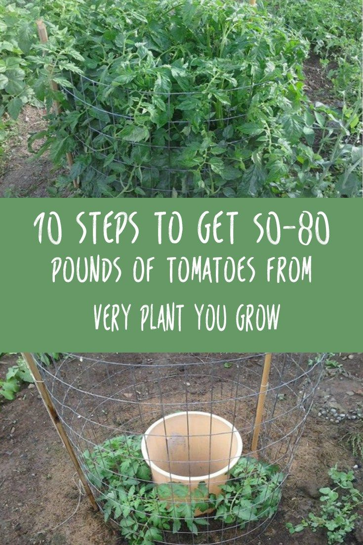 ... about Garden on Pinterest | Gardens, Planters and Morning glories