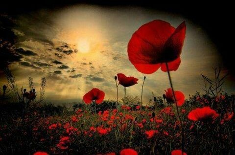 Anzac lest we forget ♥
