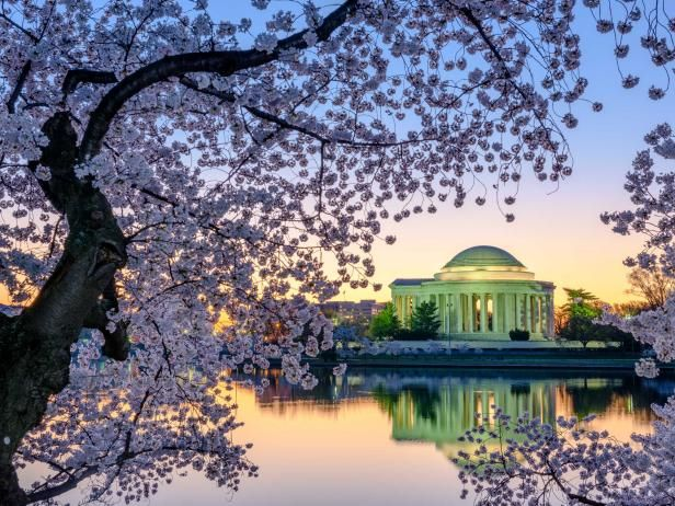 10 Cherry Trees You Ll Spot In Washington D C Adventure Bucket List Travel Channel United States Vacation