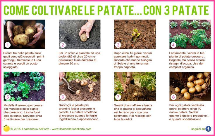 Come coltivare patate con... con 3 patate