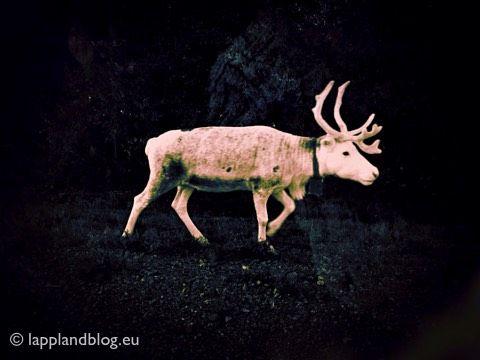 Zehn Jahre Lapplandblog - Das Original