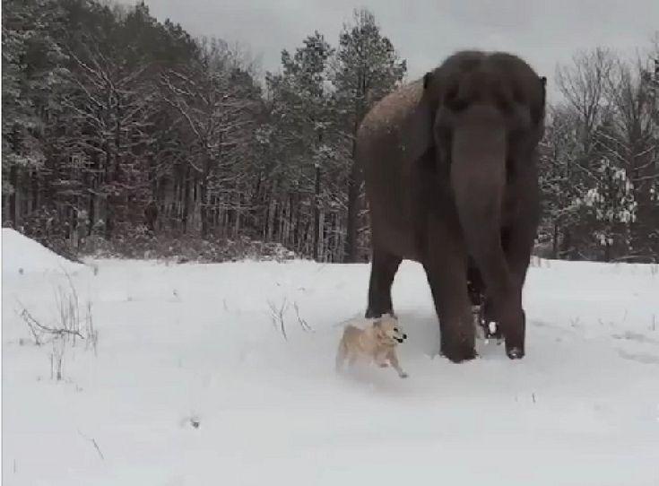 Un elefante y un perro, los mejores amigos