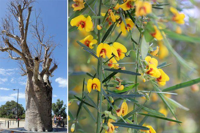 Botanic Gardens, Perth, Western Australia