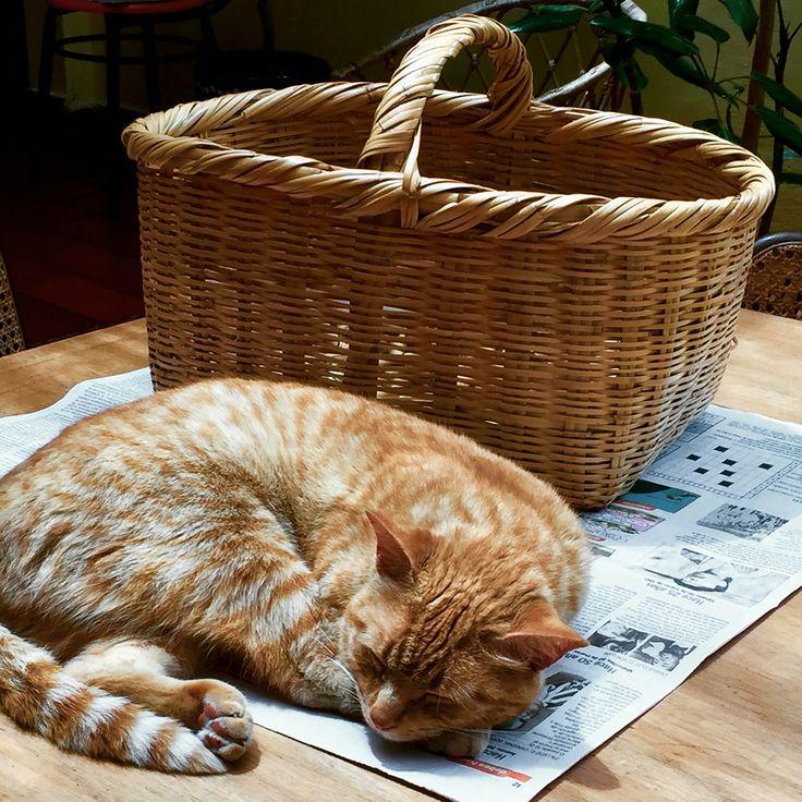 Canasto color gato o gato color canasto.