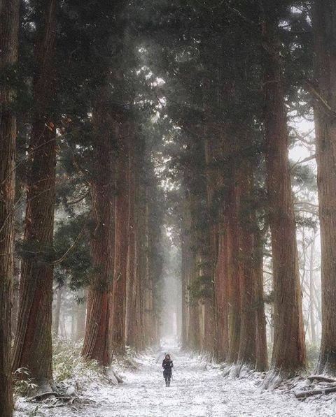 The Approach of Togakushi Shrine, Nagano Japan