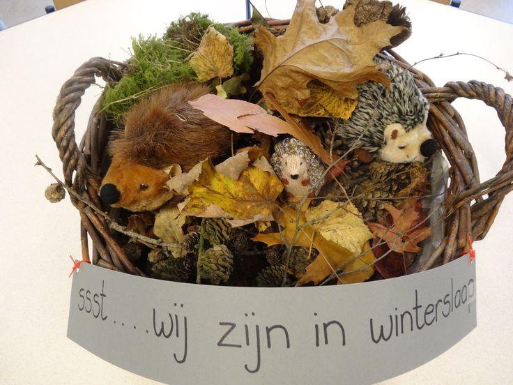 De bladeren die de kinderen verzameld hebben maken een mooi nest waarin de egels hun winterslaap kunnen houden - thema herfst - kleuters - juf Ester Klaver