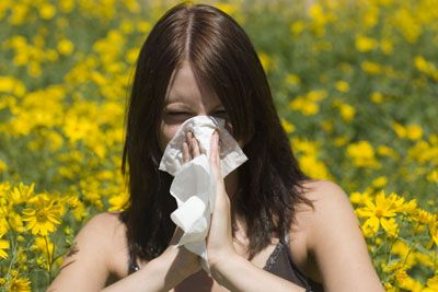 iPhone-toting allergy sufferers may now breathe a bit easier after the launch of a new mobile application Tuesday that provides users with allergy alerts and forecasts.