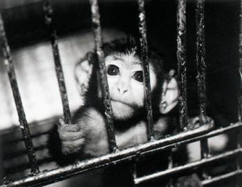 """""""Their bodies are their own; they're not ours to use. Their babies are their own; they're not ours to take. Their lives are their own; they're not ours to end. When we truly grasp that animals do not exist for our pleasure, there will be hope for them and for us. May we manifest in our behavior the compassion we hold in our hearts and thus create the peaceful world we all envision."""" Colleen Patrick-GoudreauAnimal Rescue, Animal Cruelty, Animal Welfare, Animal Videos, Abuseanim Abuse, Shared Petite, Animal Abuseanim, Health Petite, Animal Test"""