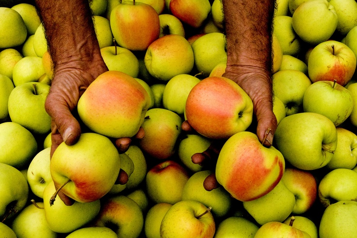 Apple from Val di Non - Italy