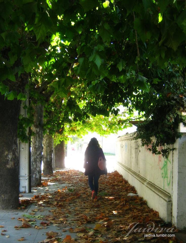 Otoño en las Calles…  #ViñadelMar #Chile #hojas #arboles #street #leaves #trees #road #fall #autum #girl #light #Vregion #jaidiva