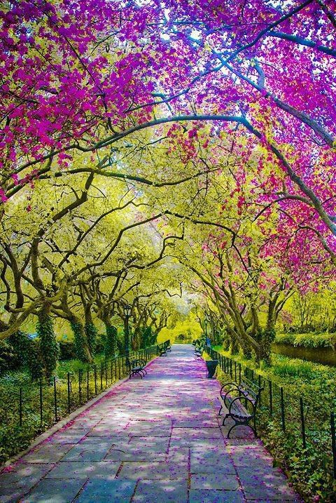 Beautiful Photo of Spring Time in Central Park - New York.