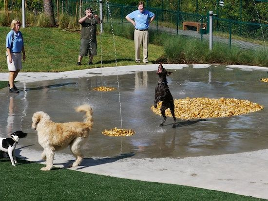 16 best dog park images on pinterest dog park dog for Dog kennels near disney world