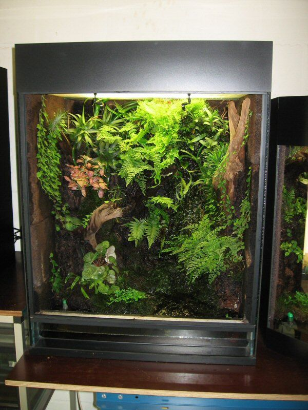 523 Best Pets Herps Tropical Terrariums Images On