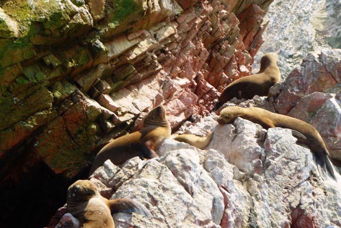 Pierwsza ważna atrakcja: rejs w poszukiwaniu egzotycznych zwierząt