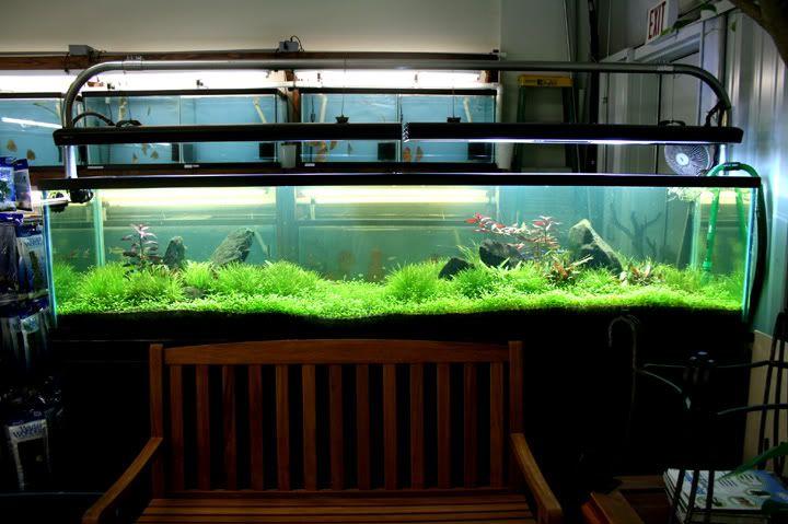200 Gallon Long Tank Google Search Aqarium Fish Tank
