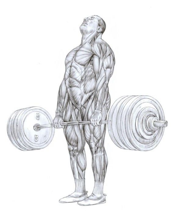The 39 best Frederic Delavier/Strength Training Anatomy images on ...