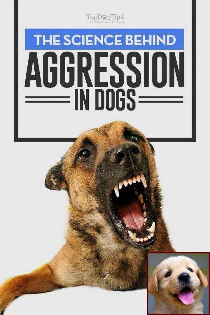 Worn By Sought Best Dog Training Tricks Dog Training