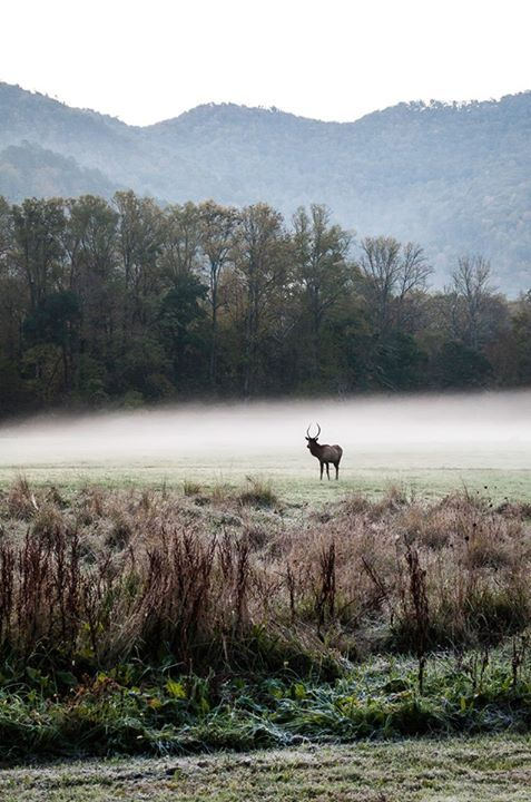 Cherokee, NC - A chance to see animals you never get to see! #microcation