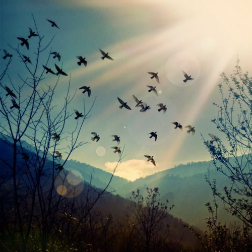Beautiful light and composition... love the slanting hill in the mid-ground + the birds soaring in the opposite direction.